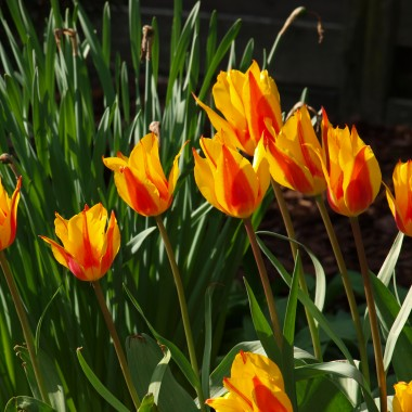 Zapraszam na spacer w wiosennych ogrodach Kapias.