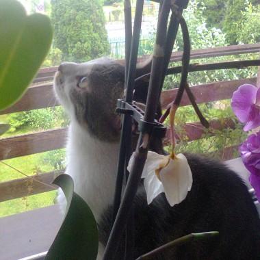 Nutka ma swoje okno na świat wśród storczyków.