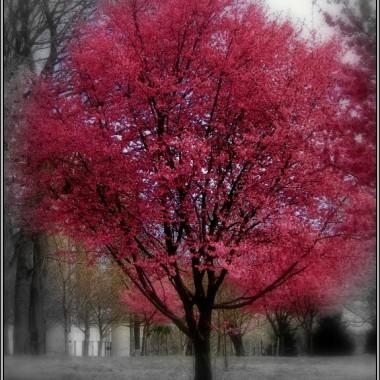 Wiosenne rozkwitanie