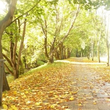 ................i droga pełna złotych liści............