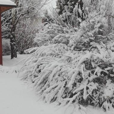 Zimowo i domowo :)