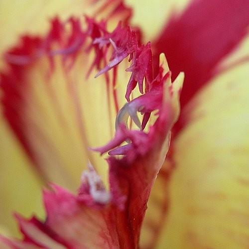Rośliny, Kwiaty - Niestety nie mojego autorstwa ,ale piękne.