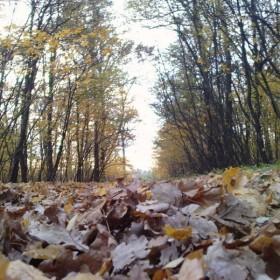Jesień...:)