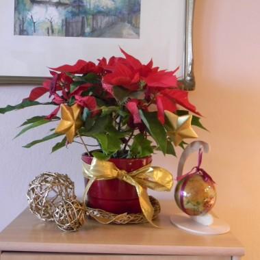 Święta jeszcze w starym mieszkaniu