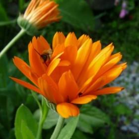 Ogródkowe kwiatki