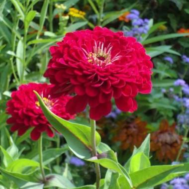 Letni spacer po Chicago Botanic Garden.