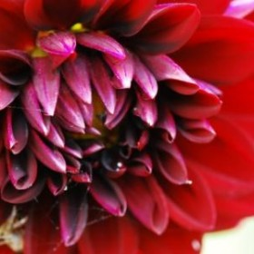 kwiatki :)