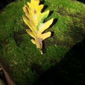 Barwy jesieni na Bielanach