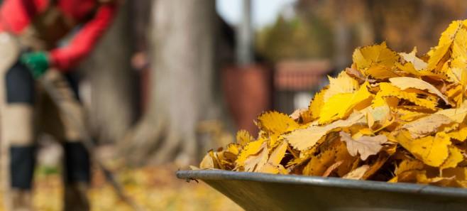 Kalendarz prac ogrodniczych: Październik