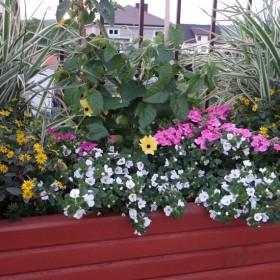W ogrodzie i na balkonie