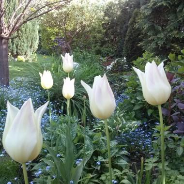 Wiosna - kolejna odsłona...