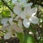 Rośliny, Majowe klejnoty w moim ogrodzie