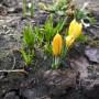 Pozostałe, Wiosna -