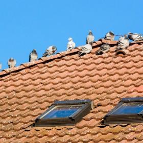 Właśnie rozpoczął się okres, w którym możesz usuwać ptasie gniazda