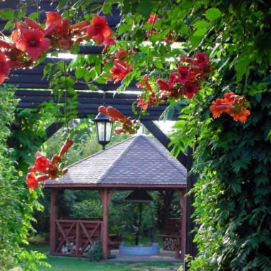 trochę lata w zimie - mój ogródek