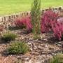 Ogród, wrzosowisko