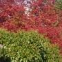 Pozostałe, Październikowe love........... - ...............i barwy jesieni...............