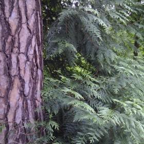 Przyroda...rośliny....wypoczynek