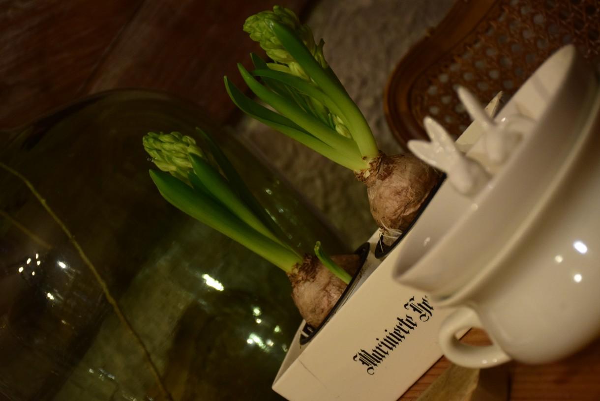 Kuchnia, Dwa hiacynty nie czynią wiosny...ale cieszą oko :)