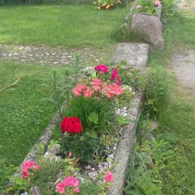 Wiosna w moim domu i ogrodzie