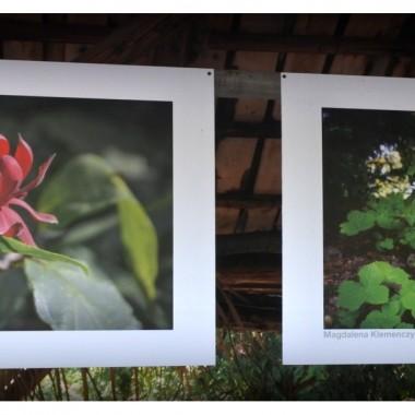 Jeszcze kilka fotografii z debiutów art..Wiem ,jak trudno,. kopiować fotki i obrazy..przy pomocy aparatu fot.,a w dodatku w pełnym słońcu.Myślę jednak,że warto na nie rzucić okiem. Otoczenie wystawy niebanalne: arboretum w jesiennej szacie. Zapraszam.
