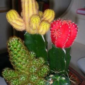 Storczyki i kaktusy.