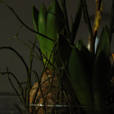 Lutowa ..................zielona.................lniana.........