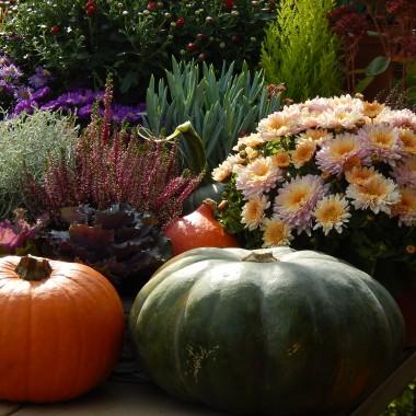 :)Do domu...Do ogrodu...Na jesienny spacer.......................Zapraszam....:)