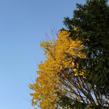 .................i jesienna fota............