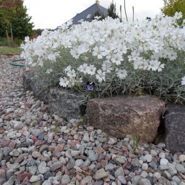 Ogród w Alei Kwiatowej