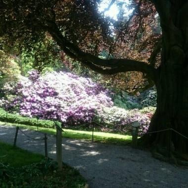 Arboretum Wojslawice i drzewo,  które mnie urzekło! :))) ma 200 lat