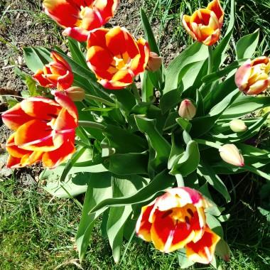 W pełnym wiosennym słońcu