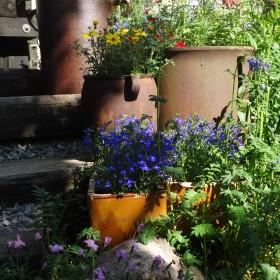 Ogród- mój raj.