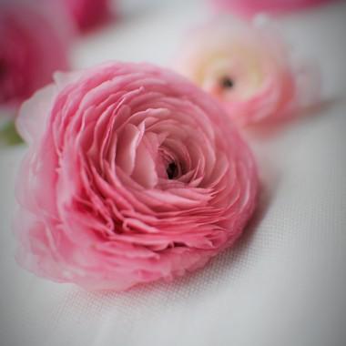 mam kilka takich kwiatów ,które są dla mnie najpiękniejsze ....takie best of the best ....takie 10 na 10 w dziesięciostopniowej skali :)) i ten jest właśnie z czołówki :)))