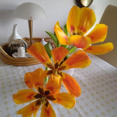 Tulipany przekwitły ale w tym stanie też mi się podobają :)