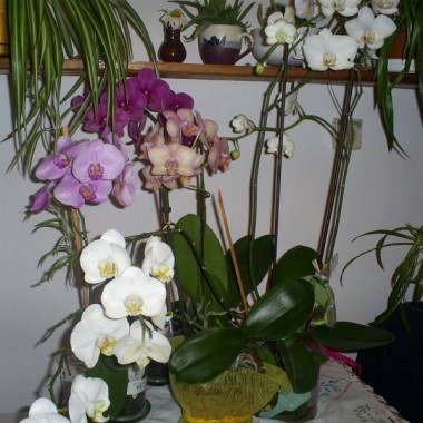 kompozycja kwiatów doniczkowych