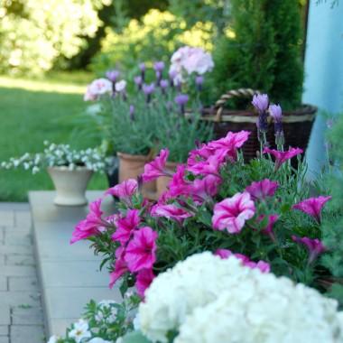 czerwiec w moim ogrodzie....