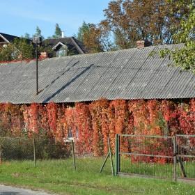 """""""jesień w moim ogrodzie/tarasie"""""""