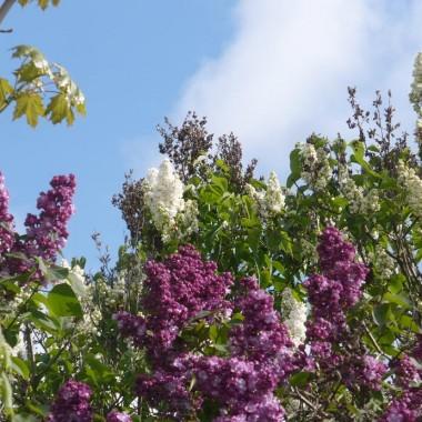 ..............kiedy wszystko kwitnie dookoła ............
