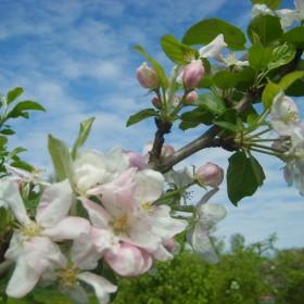 wiosno wiosno ach to ty....