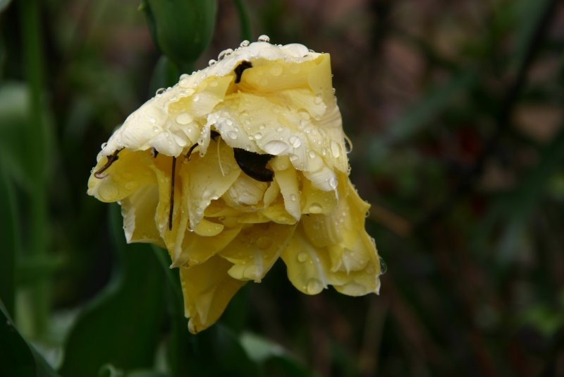 Pozostałe, Majowy deszczyk jak kryształ