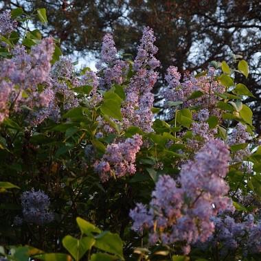 Wiosennne zapachy i kolory