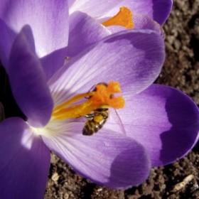 Znalazłam wiosnę w ogrodzie...
