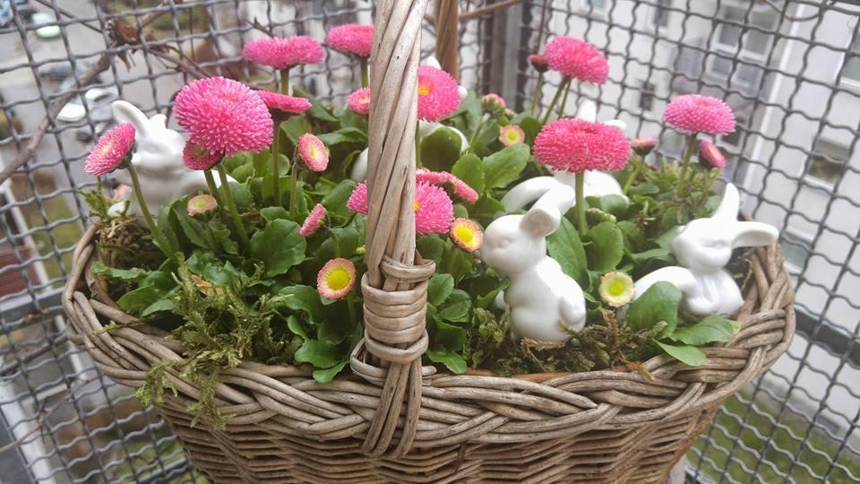 Balkon, wiosna zawitala na moim balkonie - zajączki już się zadomowiły :)