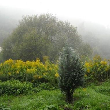 ...............Dolina Mimozy................