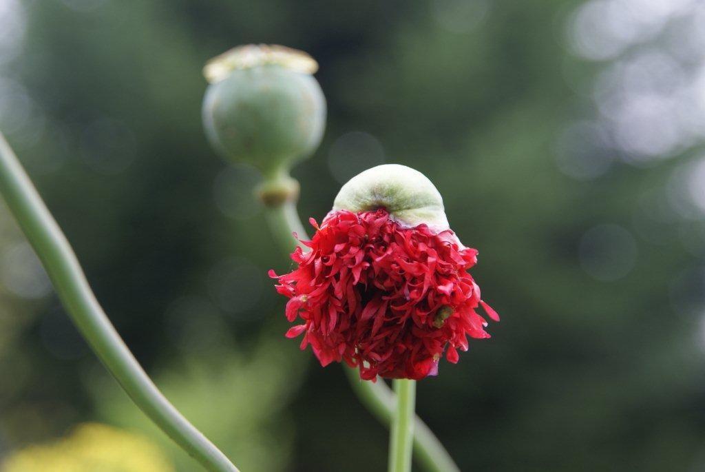 Rośliny, wypatrzone w obiektywie