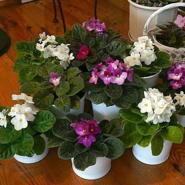 ładne kwiatki