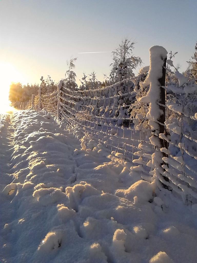 Pozostałe, zima 2014 (26.12.2014)