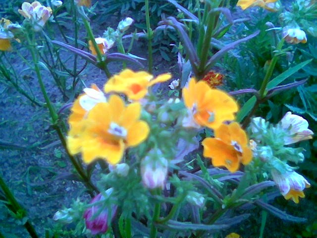 Rośliny, NEMEZJA - :)