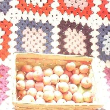 ................jabłuszka ................i pled..............